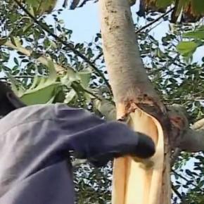 Stof van boomschors maken